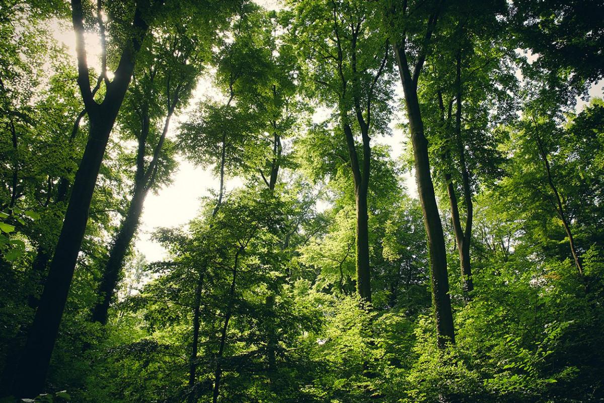klimaschutz_kassel_17.jpg-s1250